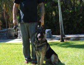Denzel Family Protection Dog