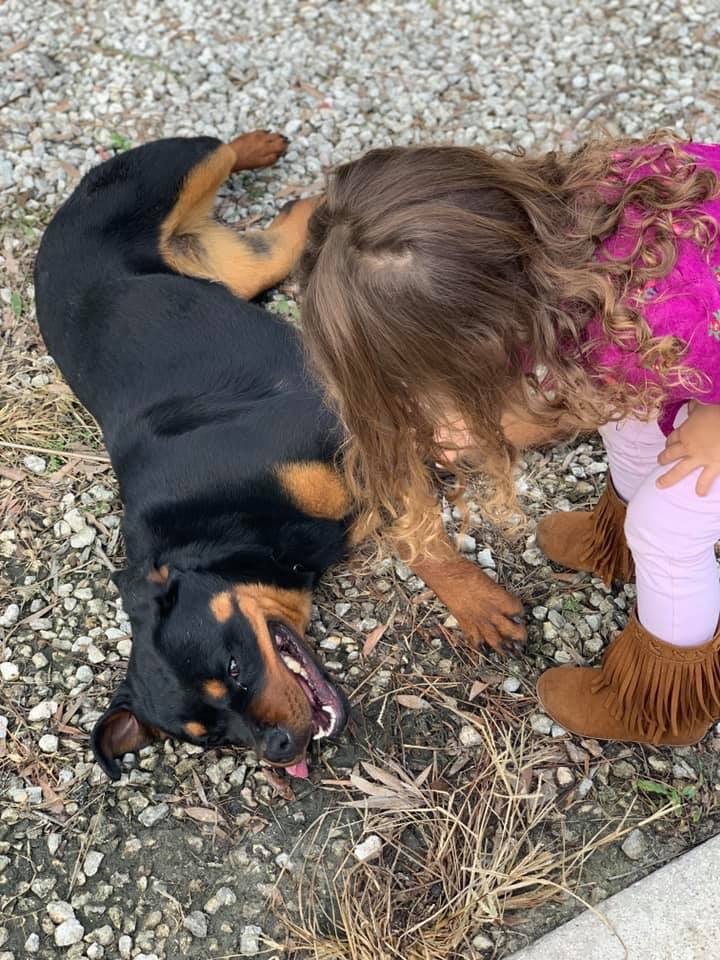 Lola Family Protection Dog