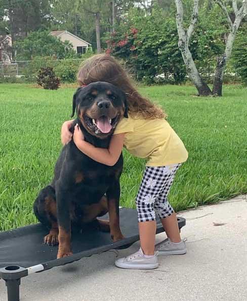 Tyson Protection Dog