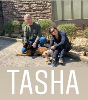 Tasha Family Protection Dog
