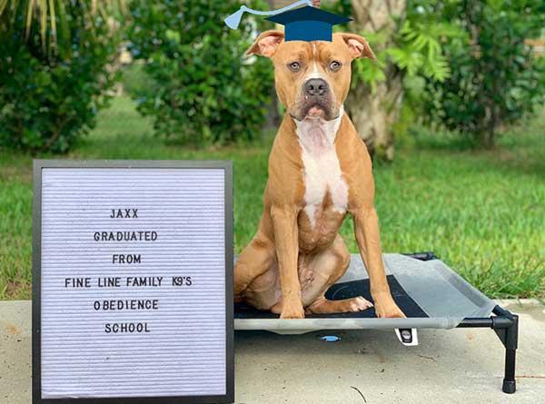 Board and Train Graduate Jaxx