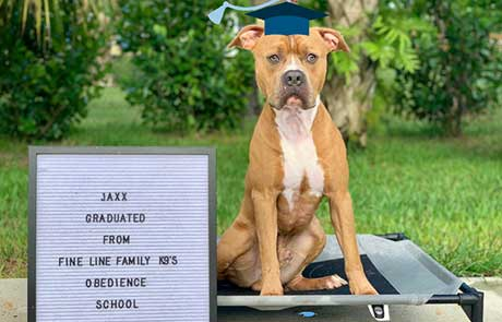 Board and Train Graduate Jaxx