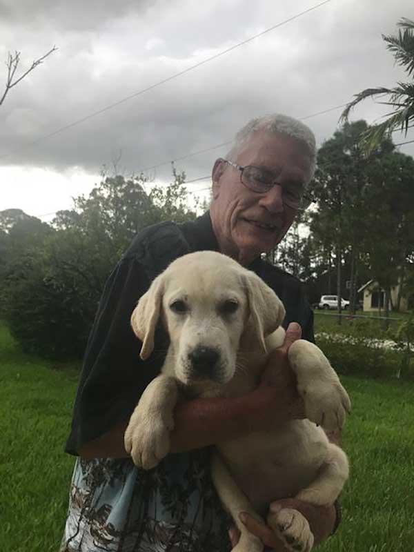 Ghost English Labrador Puppy