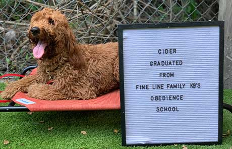 Cider Dog Training Graduate