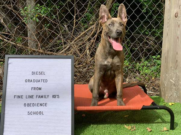 Diesel Dog Training Graduate
