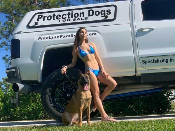 Elektra Belgian Malinois Family Protection Dog Featured