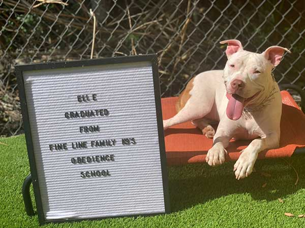 Elle Dog Training Graduate