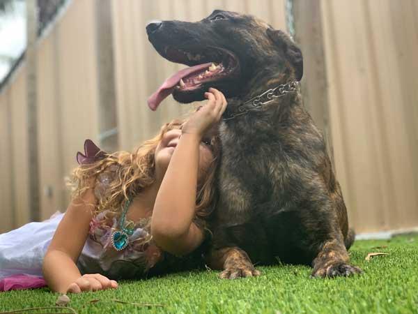 Rat Dutch Shepherd Protection Dog