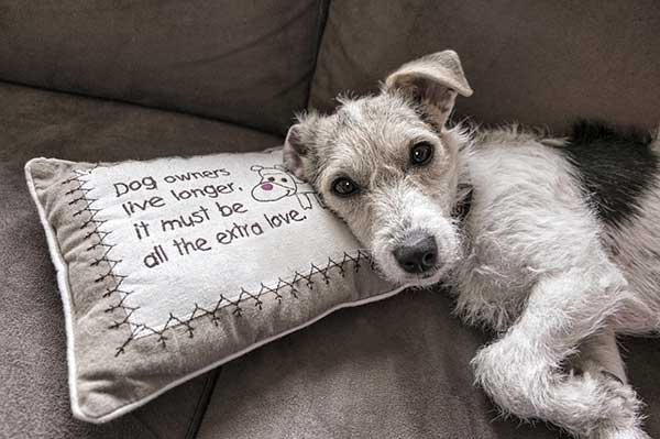 Dog Dilemma