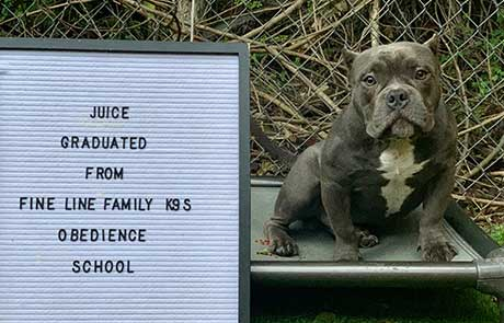 Juice Dog Training Graduate