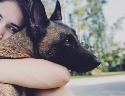 Is A Protection Dog Friendly?